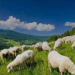 20% по-високи ставки за обвързана подкрепа в планинските райони за 2020 г.
