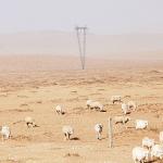 Утвърдиха 25,7 млн. лв. за животновъдите