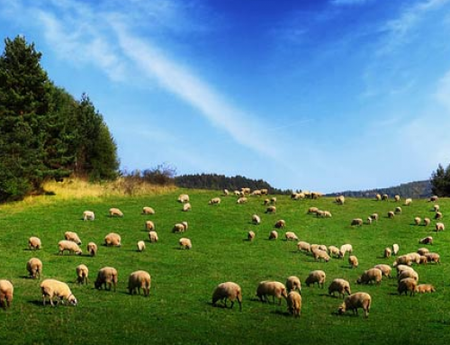 Комисията по земеделие изслушва НОКА