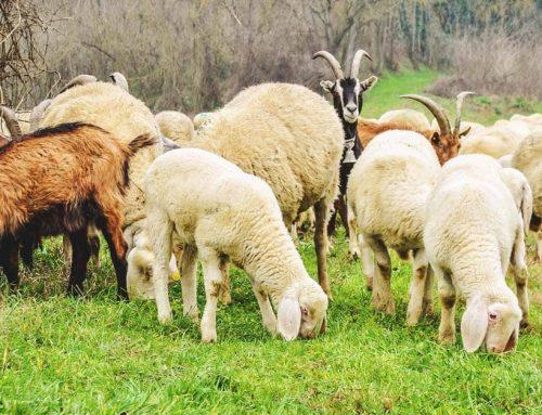 НОВ прием за кандидатстване по de minimis за изхранване на животни от 2 февруари до 15 февруари 2021